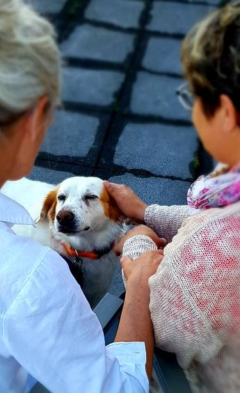 palliativteam-hochtaunus-hund-sam